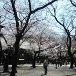 靖国神社 桜02