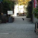 神楽坂の猫01