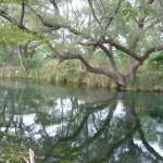 美しい川面
